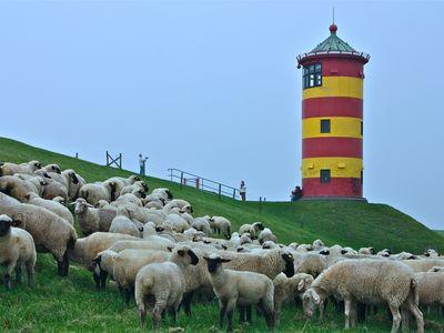 Bild Pilsumer Leuchtturm Schafe
