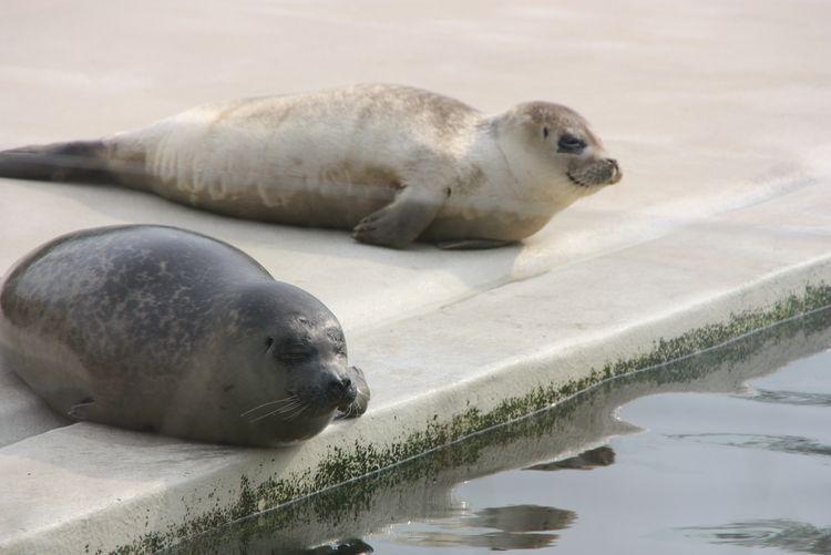 Bild Region und Landschaft UNESCO Weltnaturerbe Wattenmeer Seehundstation