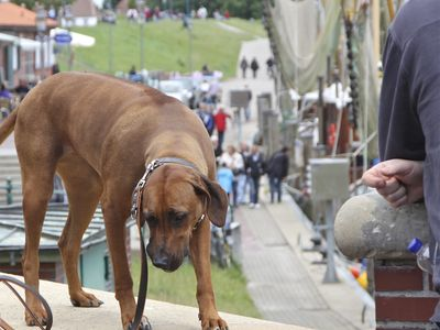 Bild Urlaub mit dem Hund hellbraun