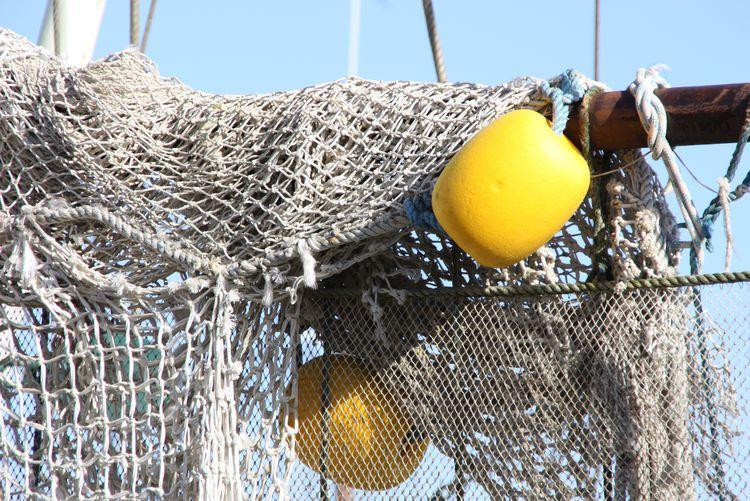 Bild TV-Shows Fischer fischt Frau