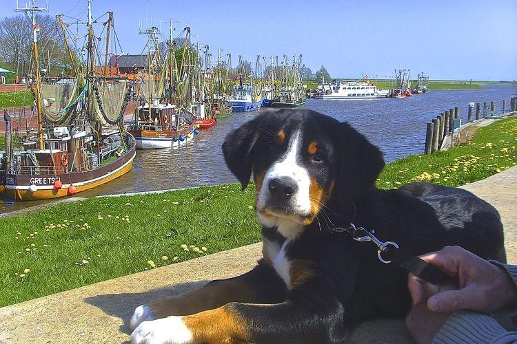 Bild Urlaubsthemen Urlaub mit Hund