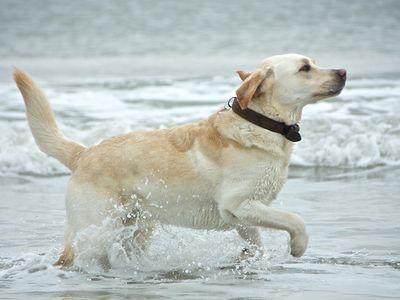 Bild Urlaub mit dem Hund Winter