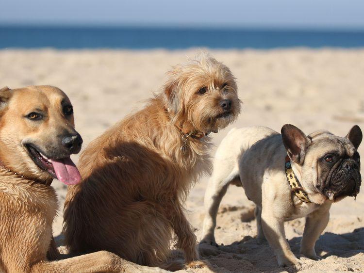 Bild Urlaub mit dem Hund Hundestrand