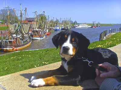 Bild Urlaub mit dem Hund schwarz
