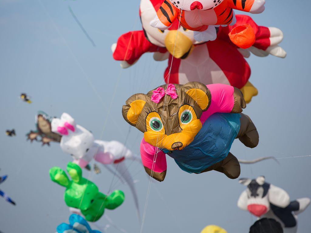 Bild Drachenfest Hero Vogel