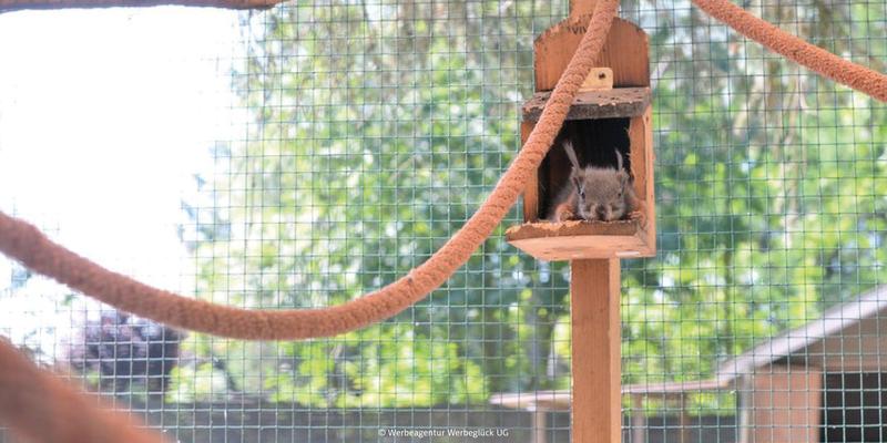 Bild Kinder und Familien Ausflugsziel Tierpark Rechtsupweg
