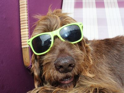 Bild Urlaub mit dem Hund grau