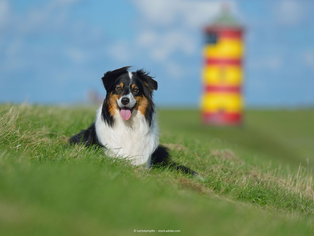 Bild Urlaub mit Hund Hero