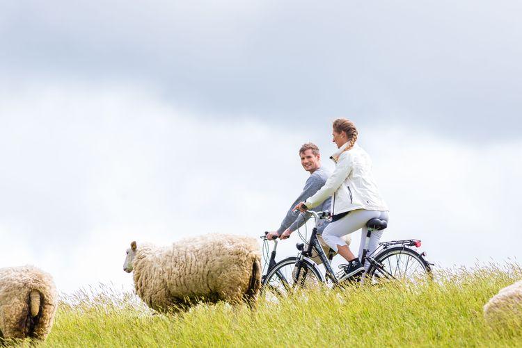 Bild Urlaubsthemen Radfahren