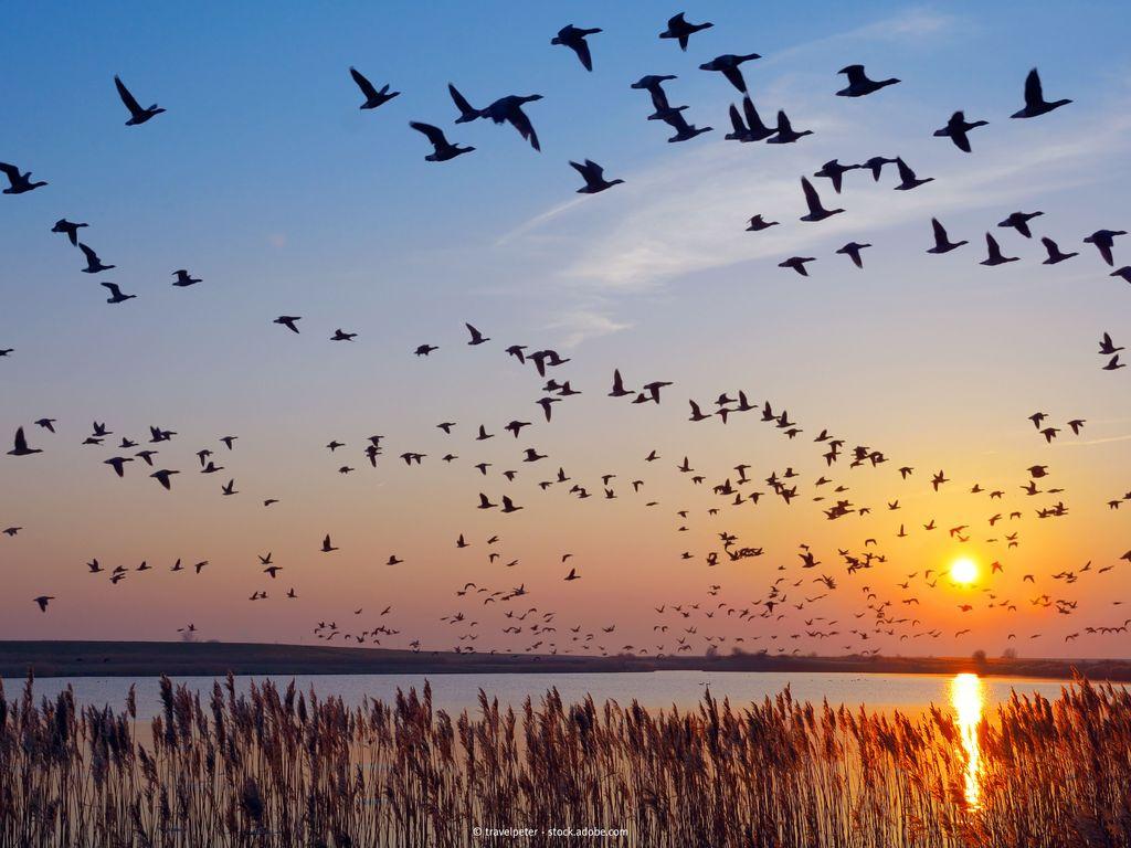 Bild Nationalpark weltnaturerbe wattenmeer hero vögel