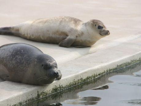 Bild Museen Seehundstation