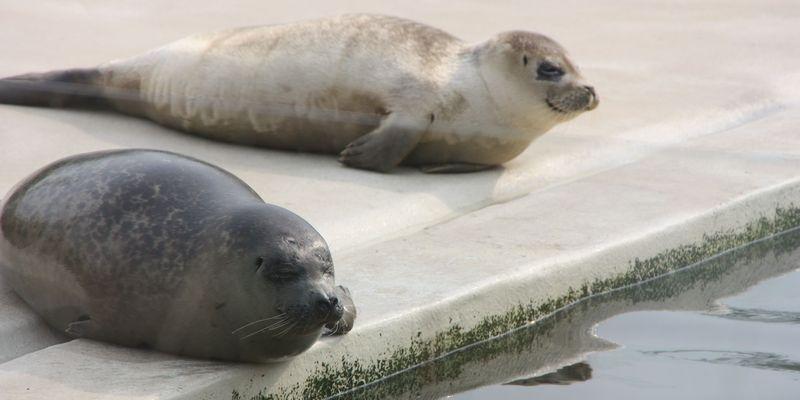 Bild Kinder Seehundstation Norddeich