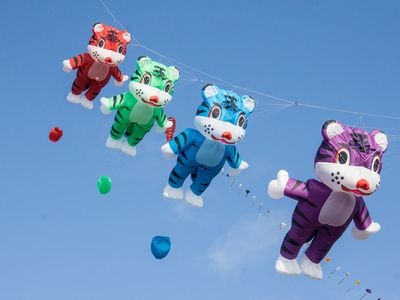 Bild Familien Drachenfest Bären